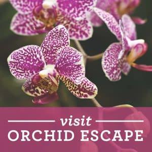 Orchid Escape Banner 2